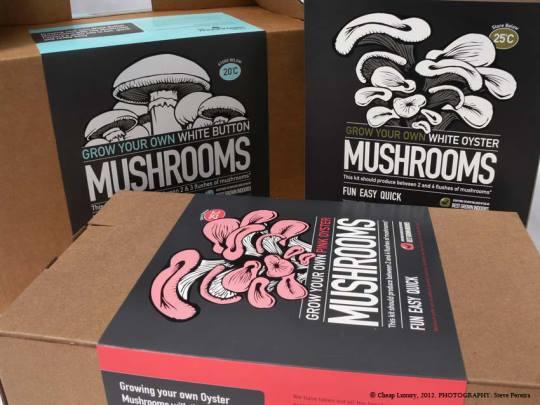 The Mashroom Factory