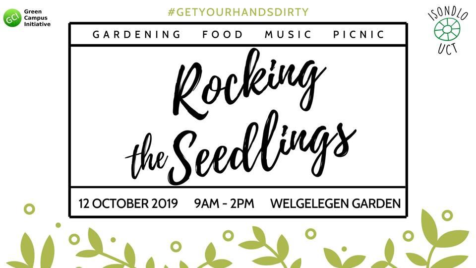 Rocking-seedlings