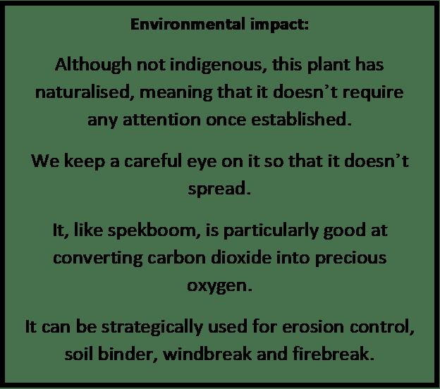 Saltbush environmental