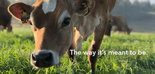 cropped Farm2You free range dairy banner