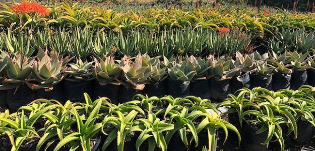 cropped Get Gardening Cape Town online nursery banner
