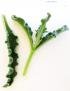 Brakslaai Leaves (500g)