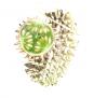 Wild Cucumber (500g)